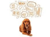 Hund mit Gedankenblasen